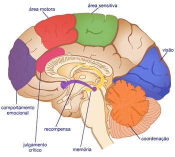 Veja detalhes do circuito de recompensa cerebral  (Reprodução www.virtual.epm.br)
