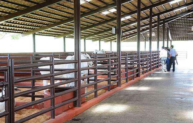 Na Fazenda Guará, as 18 baias ficam no centro dos piquetes: sem riscos para a circulação e fácil acesso (Marcos Vieira/EM/D.A Press)