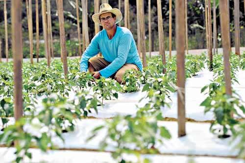 'Temos que produzir muito em pouco espaço. Quem consegue isso, vive bem no campo' - João Generoso, produtor rural que investiu na plantação de pimentões (Geyzon Lenin/Esp. CB/D.A Press)