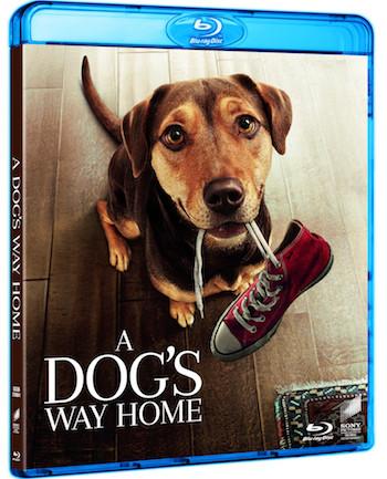 A Dogs Way Home 2019 English 720p BRRip 950MB ESubs