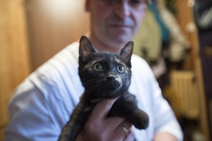 «Мы везем с собой кота!»: как правильно путешествовать с животными