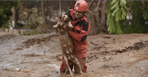 Resgate de cadela após quatro dias do rompimento da barragem (Foto: Douglas Magno/AFP)