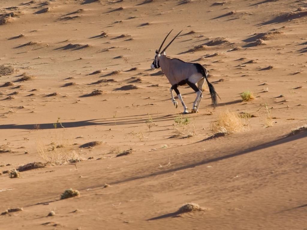 https://i2.wp.com/imguol.com/c/noticias/2015/03/02/2mar2015---o-orix-e-um-antilope-grande-nativo-das-regioes-aridas-do-sul-africano-como-o-deserto-da-namibia-os-orix-sao-cacados-por-conta-de-seus-longos-chifres-que-tem-85-centimetros-em-media-no-1425306044643_1024x768.jpg