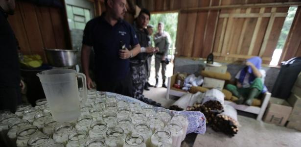Policiais fazem apreensão de palmito extraído ilegalmente em Maquiné, no RS