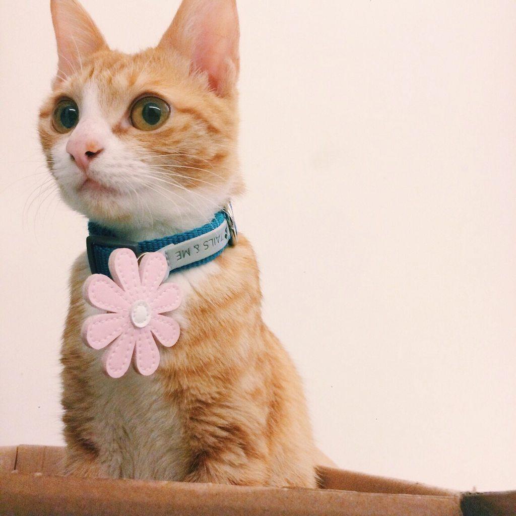#圖 #貓 最佳青梅竹馬 - 寵物板 | Dcard
