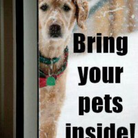 If you are cold, they are cold--who's bringing them inside?