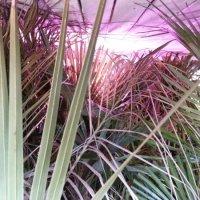 Et kig ind i mit palme vinterhi