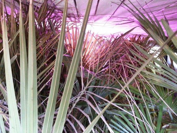 mine palmers vinterhi