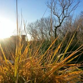 sol og lidt koldt i haven © iminhave.dk