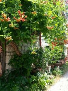 Eksotiske klatreplanter i pottemagerens gårdhave i Torri del Benaco © iminhave.dk