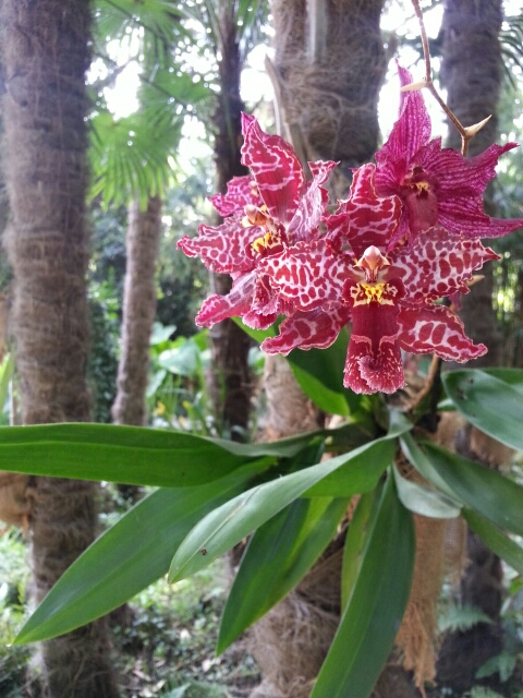 Orkide plantet på palmestamme i Heller garden © iminhave.dk