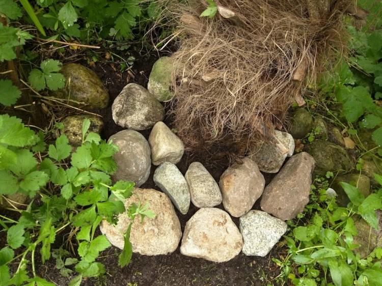 sten omkring stammen holder på fugt, giver ekstra varme og beskytter om vinteren