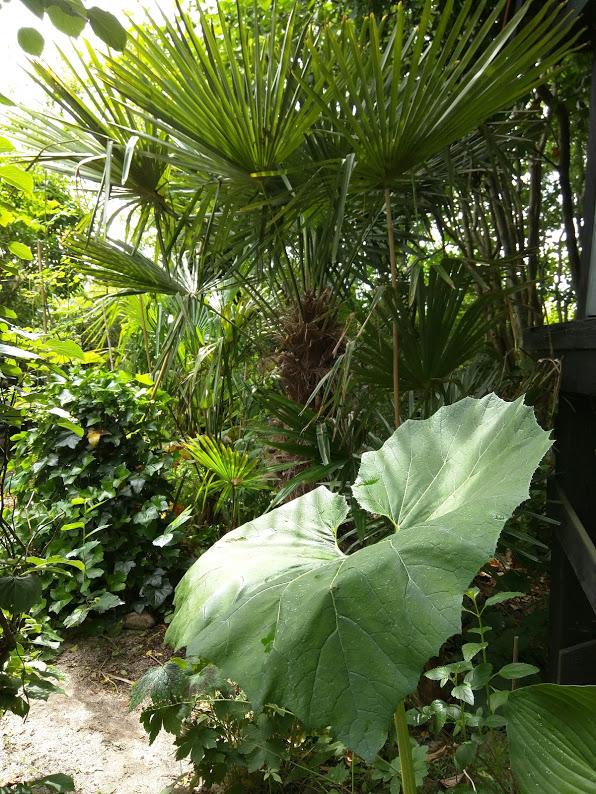 Sådan får du succes med palmer i din have