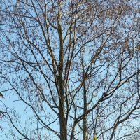 Skal hørpalmerne pakkes ind om vinteren?