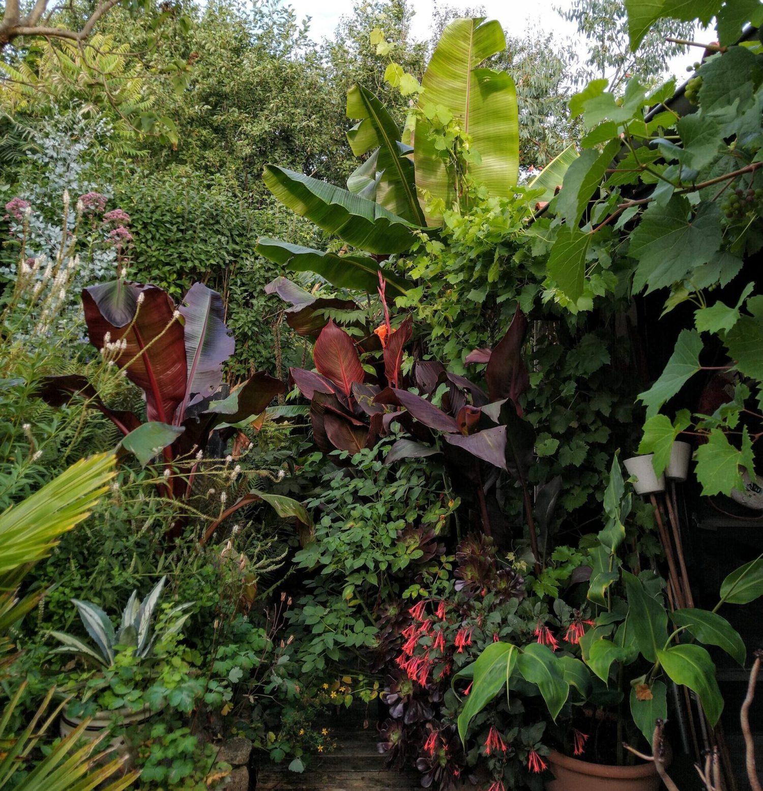 Stien til junglehaven