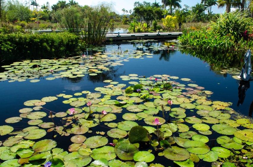 botanical gardens 267