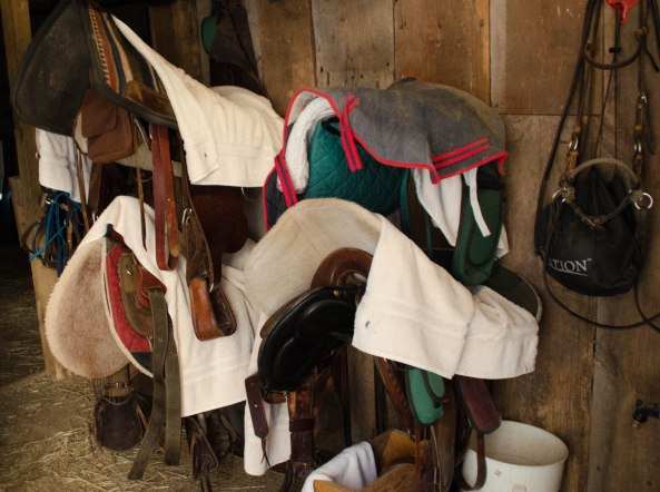 Saddles stored until another day.