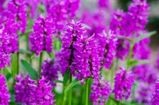 summer flowers 023