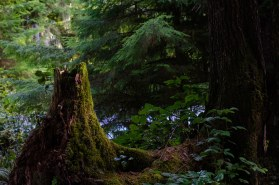 rainforest 144