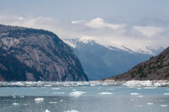 The water was littered with ice from the glacier calving.