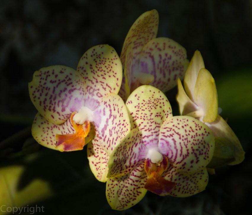 20150127-Botanical garden 129