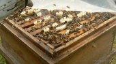 Bienenkasten kl.