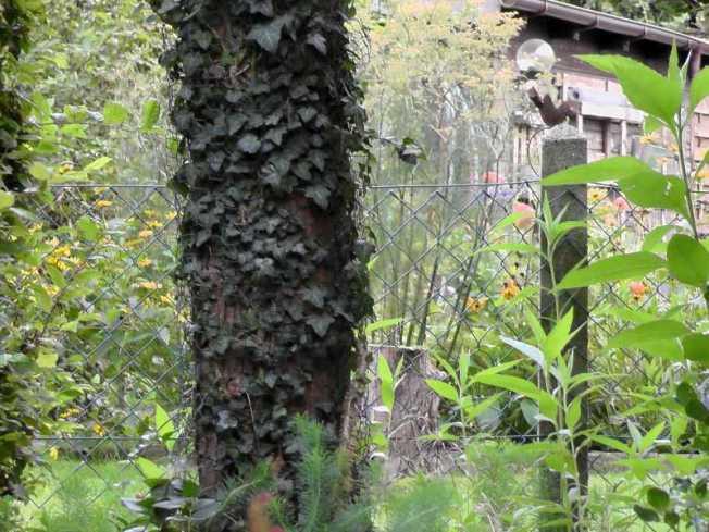 Hornissenheim im hohlen Baumstamm