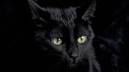 gatto_nero_black_cat