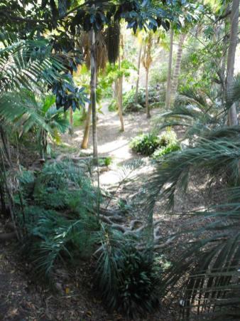 San Diego Highlights - Balboa Park Dschungel