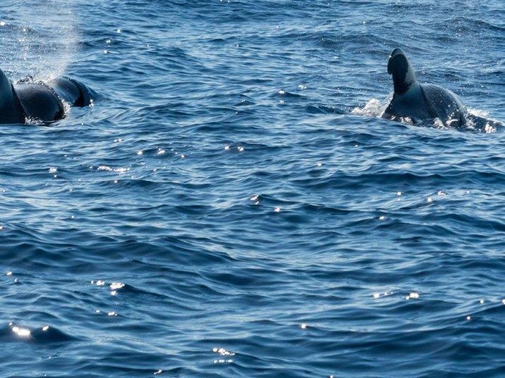 Teneriffa Urlaub - Pilotwale