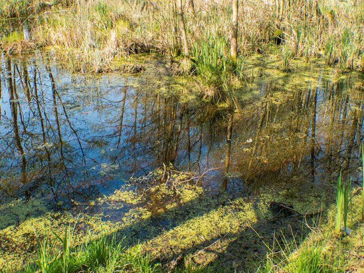 Inselsafari - Wasserspiegelung im Sumpf