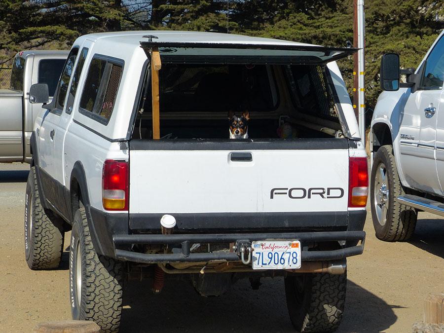 Highway 1 Morro Bay Hund im Auto