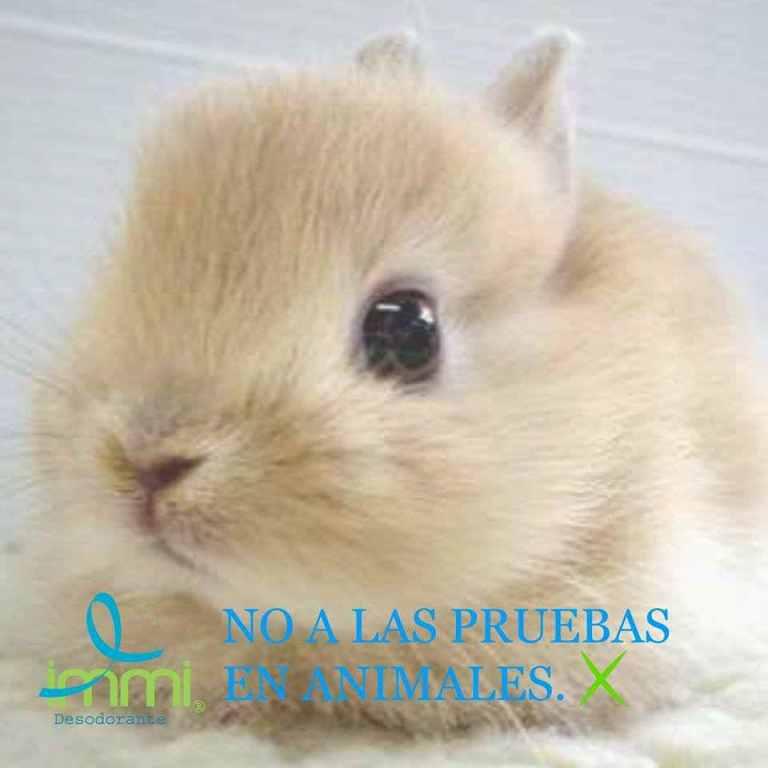 Lee más sobre el artículo No a las pruebas en animales