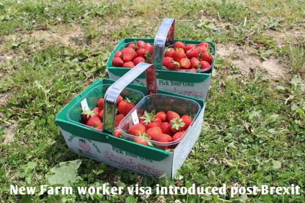 New Farm worker visa pilot scheme introduced post-Brexit