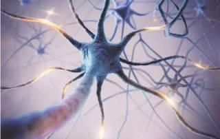 Situmulez votre nerf vague pour une meilleure santé
