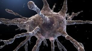 dendritic-cell_e5bf7b06bb6ab713711cb5d17aa40722