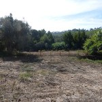 1 hectare property for sale near Monchique