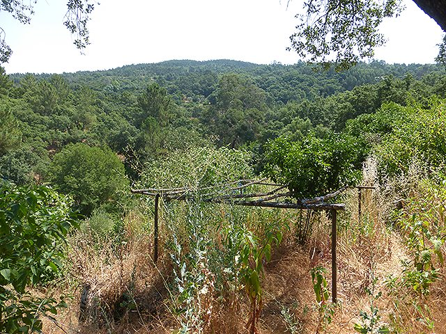 land with fruit trees and farm near Monchique for sale