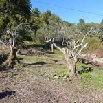Plot Monchique Portugal for sale