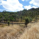 Terrain with ruin Monchique for sale Imochique