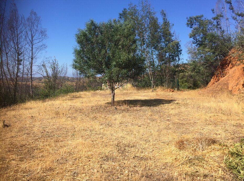 Monchique Land for sale Imochique