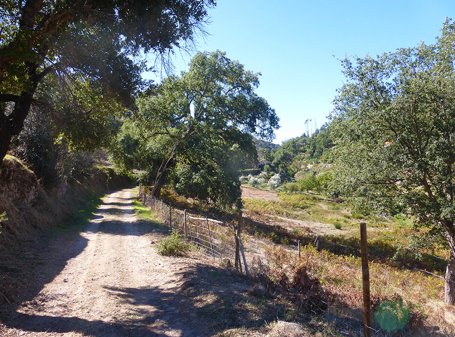 Land with ruin for sale in valley with stream Monchique