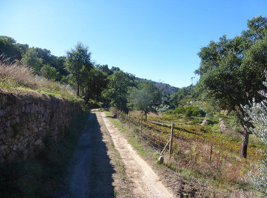 Monchique land for sale