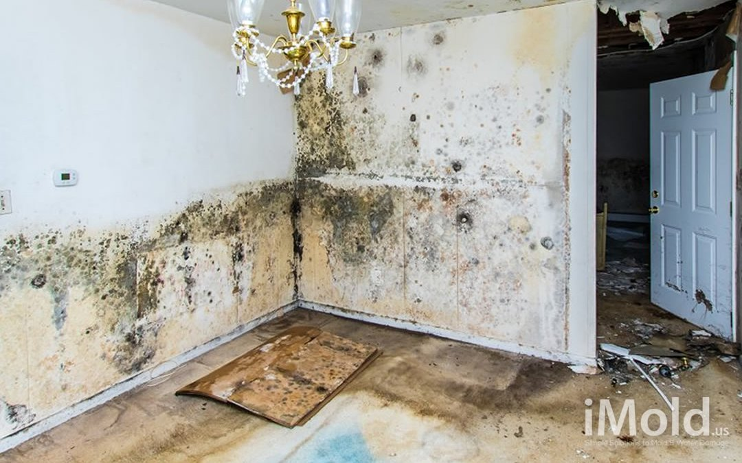 Water Damage in Fort Myers, Florida