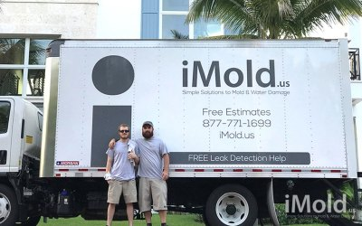 Mold Removal: When To Call A Pro