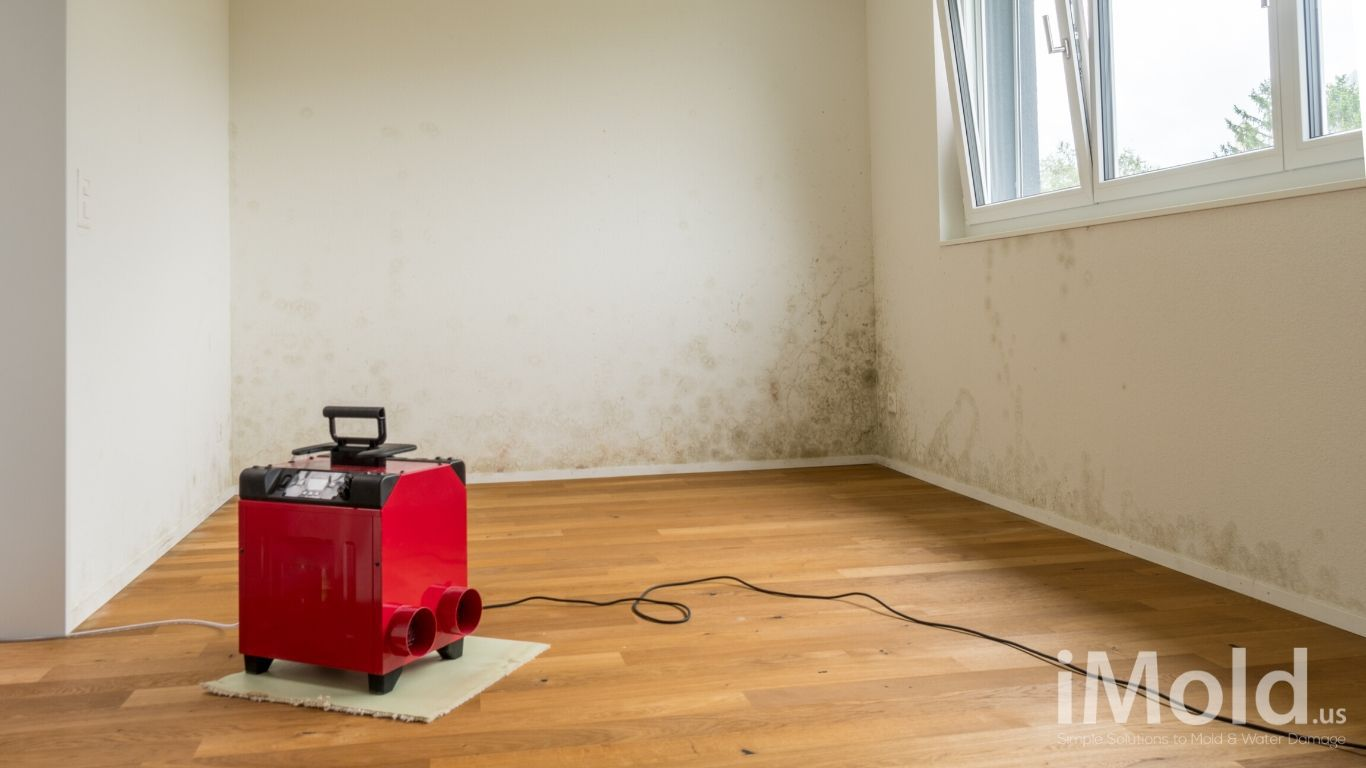 Painting Over Mold