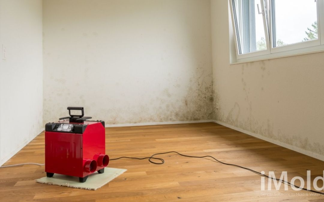 Painting Over Mold – Should You Do It?