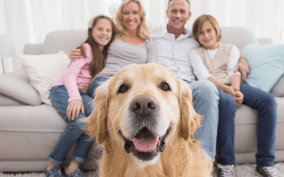 How Mold Affects Your Pets