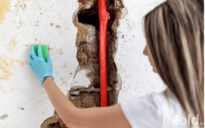 6 Tips for Preventing Mold in Your Florida Home