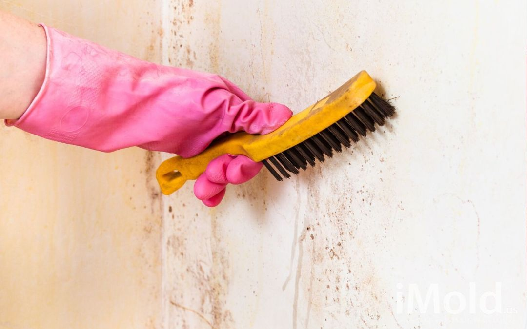 The Dangers of DIY Mold Removal in Fort Myers